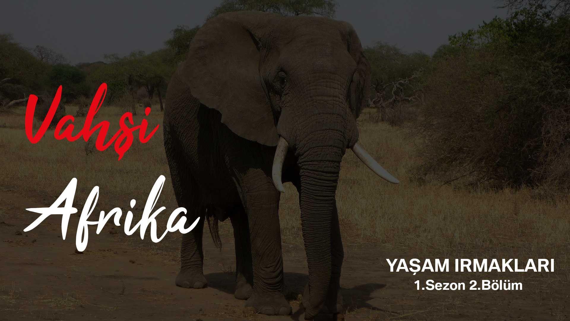 Vahşi Afrika: Yaşam Irmakları | 1.Sezon 2.Bölüm