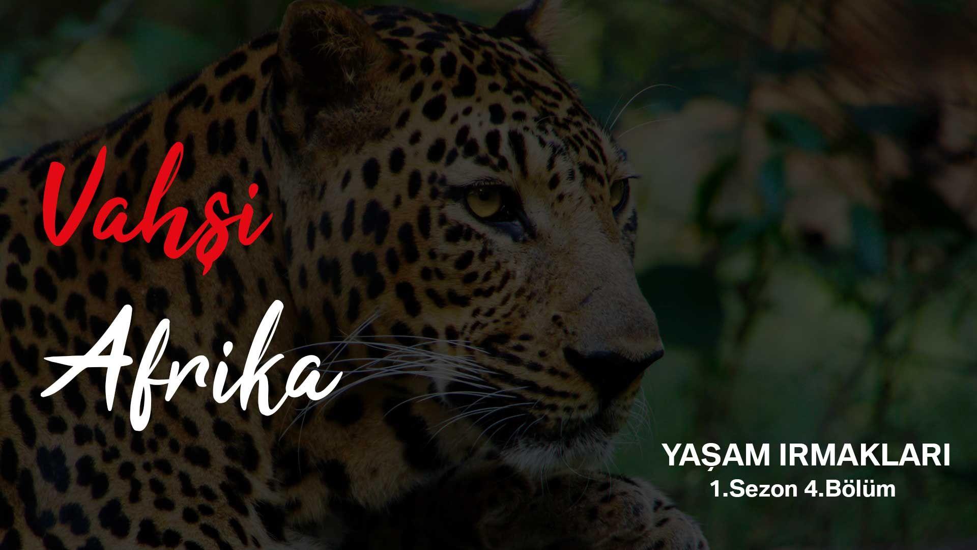 Vahşi Afrika: Yaşam Irmakları | 1.Sezon 4.Bölüm