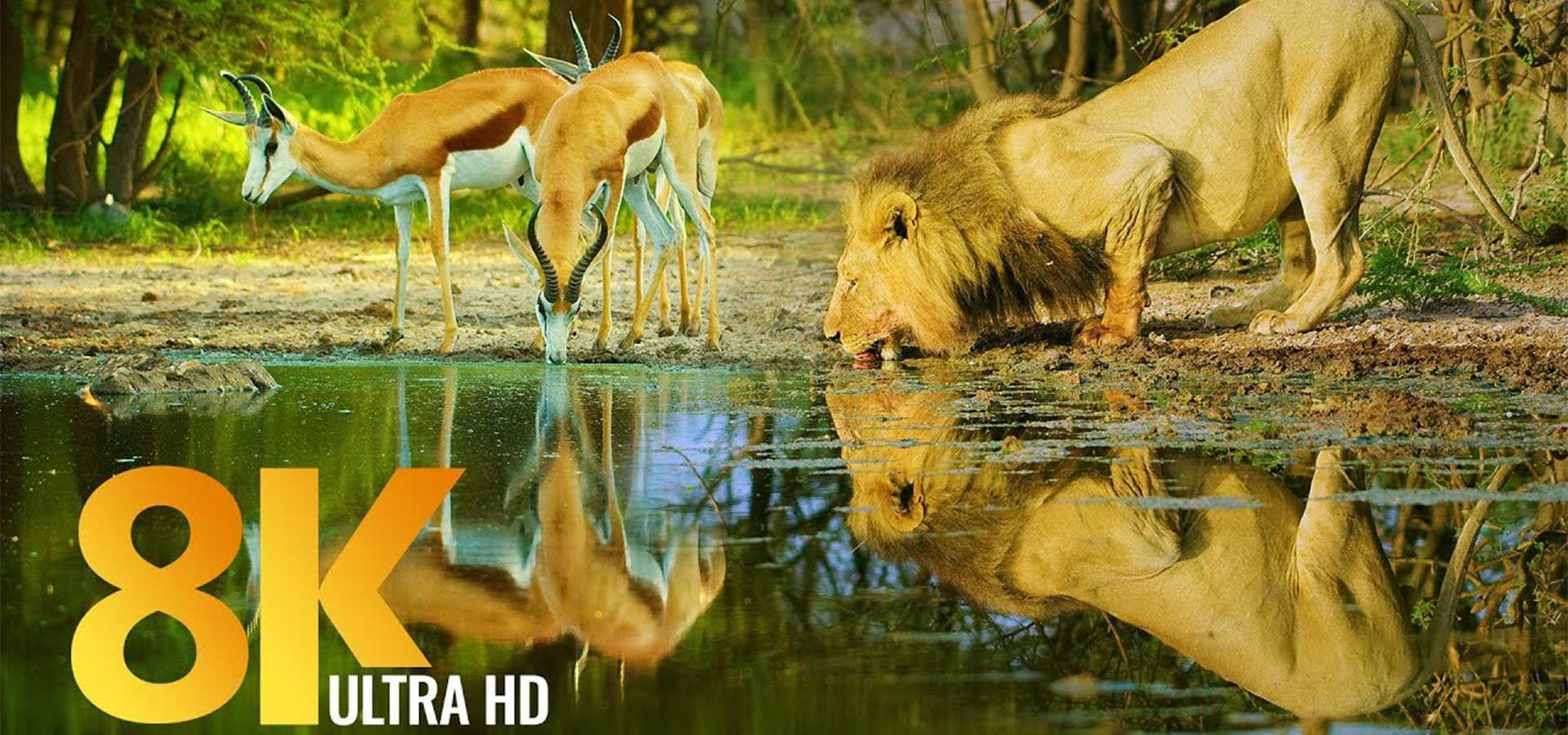 Botsvana'nın Muhteşem Vahşi Yaşamı