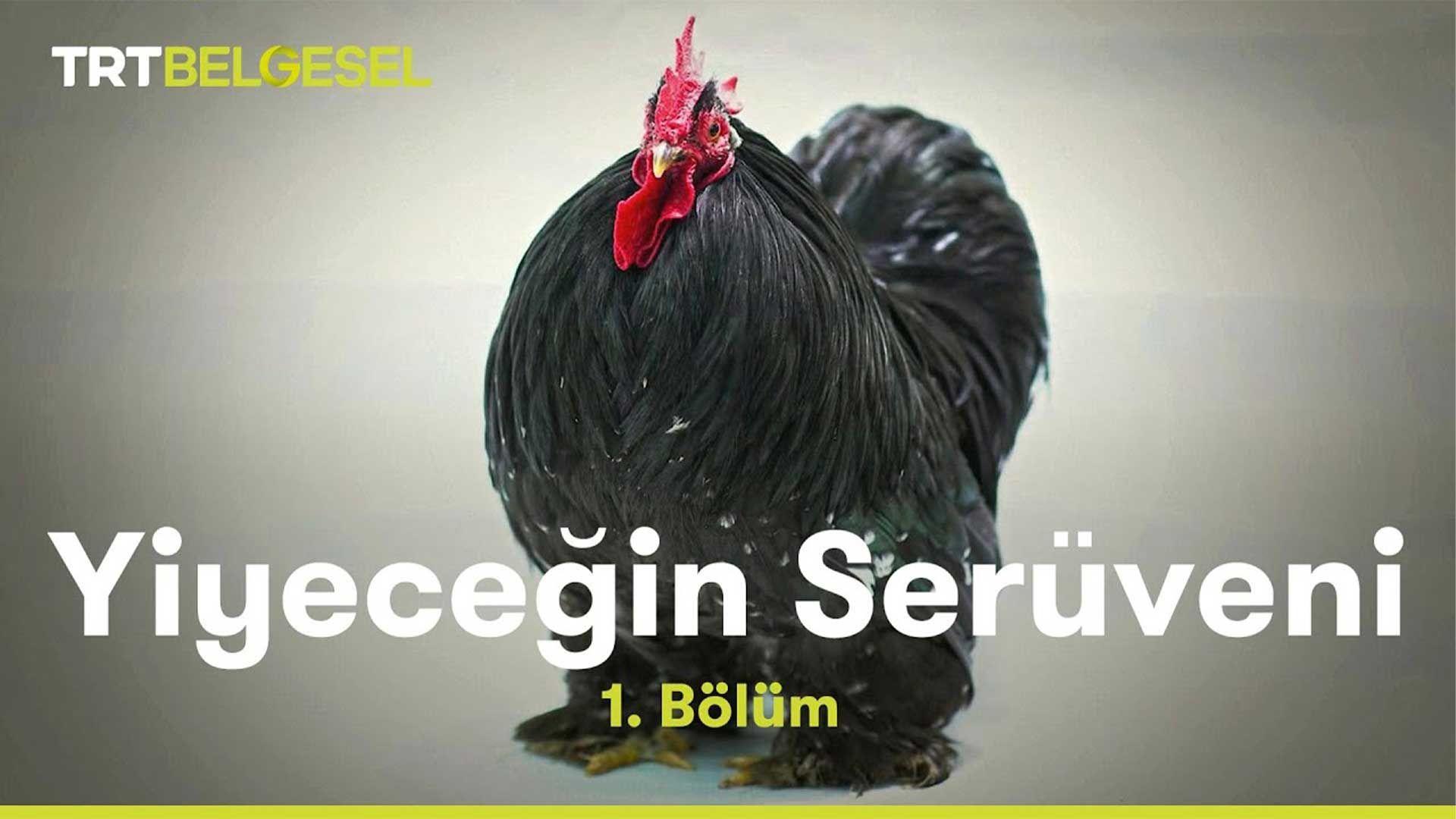 Yiyeceğin Serüveni | Tavuk