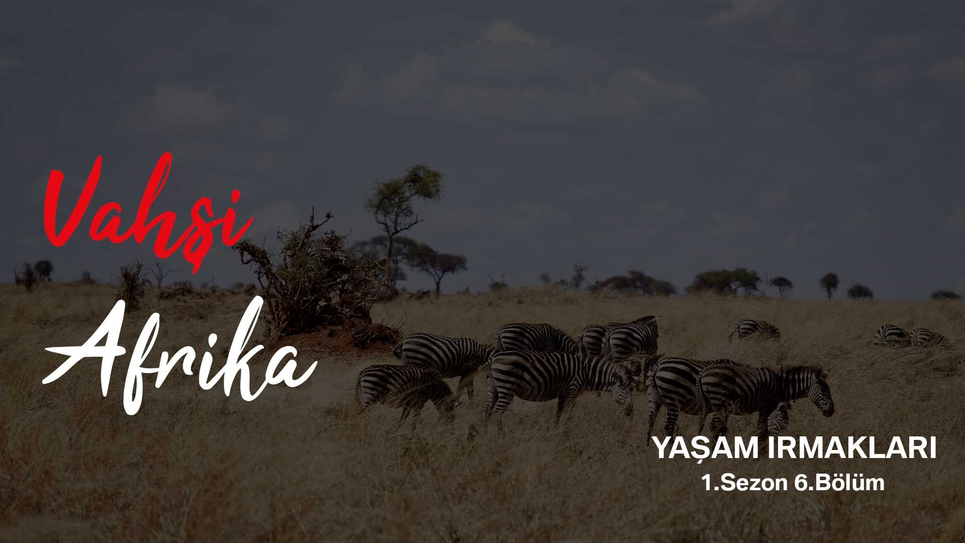 Vahşi Afrika: Yaşam Irmakları | 1.Sezon 6.Bölüm